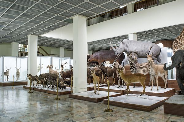 Gamtinė - pažintinė kelionė : T.Ivanausko muziejus ir sodyba – Naktinėjimas su švytinčiais organizmais
